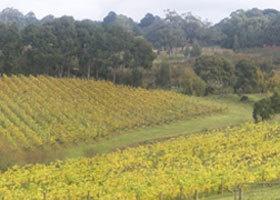 Foxeys Vineyard