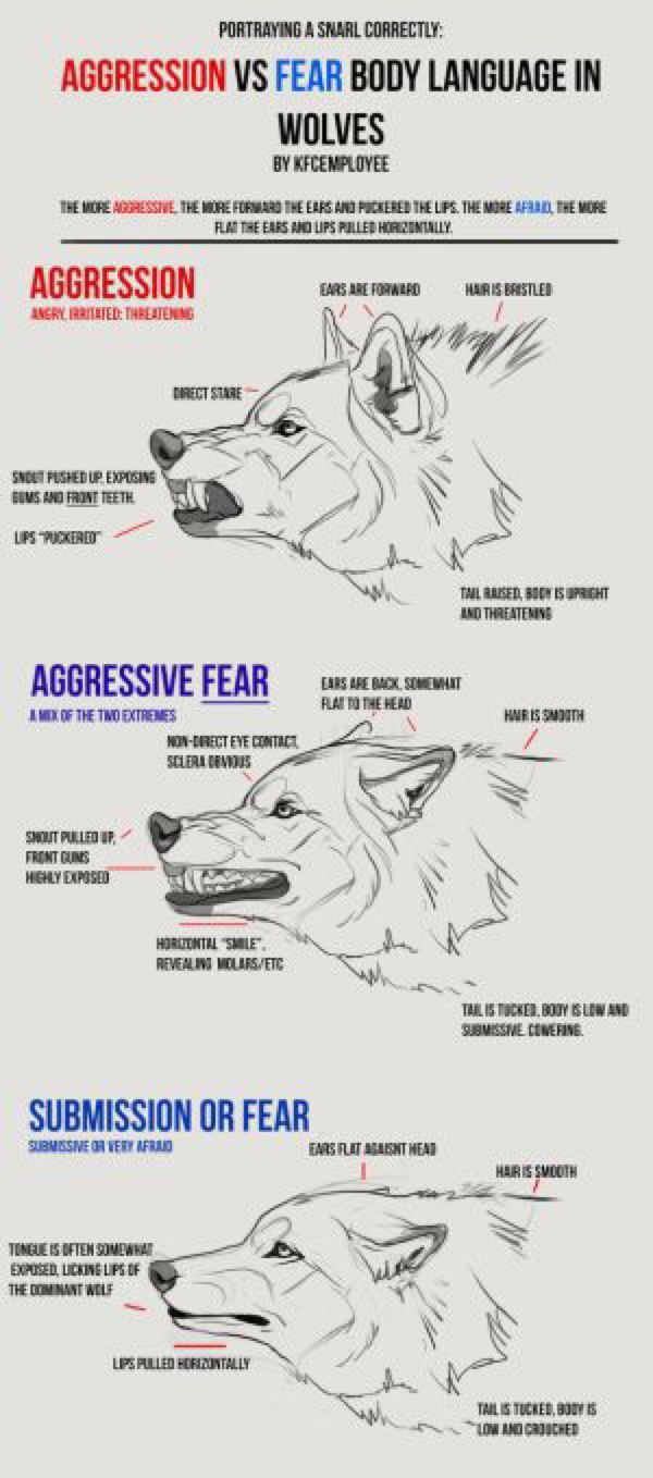 Agression vs Fear in Wolves cheat sheet: Snarls by KFCemployee on @DeviantArt