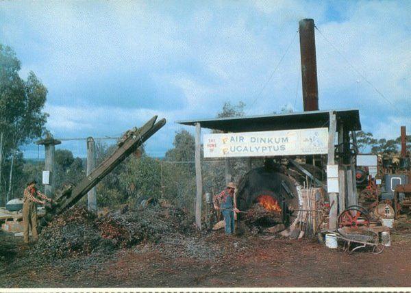 Fair Dinkum Eucalyptus - Sandhurst Town Bendigo..jpg