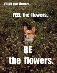 9fcca68741ebde03df6df71a71584983 corgis funny stuff 18 best flower meme's images on pinterest funny things, funny