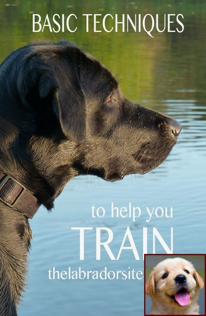 Dog Behavior Running In Circles And Service Dog Training Courses