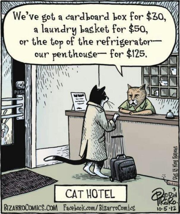 124 Best Laundry Humor Images On Pinterest Laundry Humor