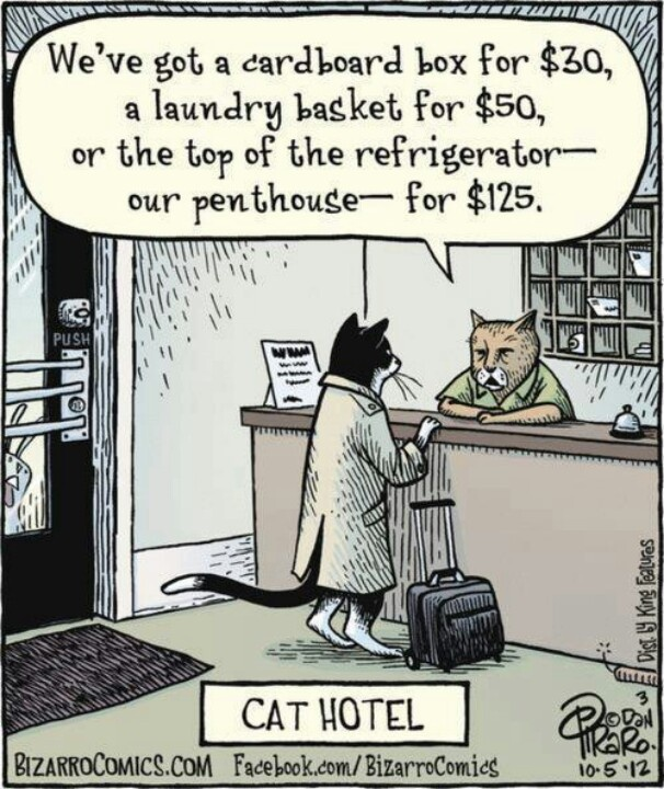 17 Best images about Laundry Humor on Pinterest | Iron man ... Funny Hotel Jokes
