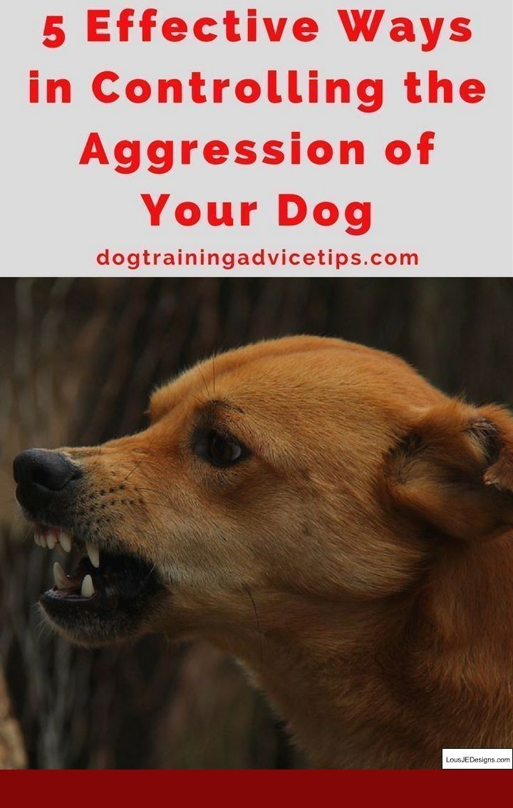 How To Train A Dog To Attack On Command And Pics Of How Do You