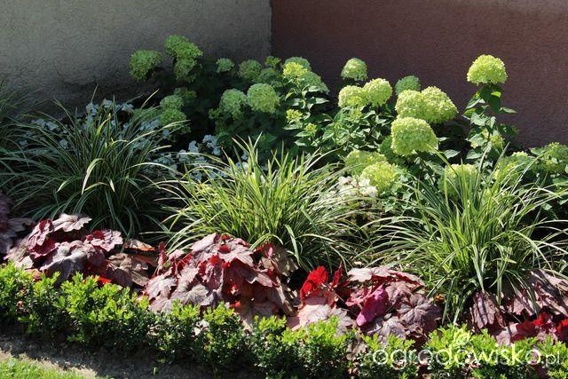 Trawiasto-hortensjowe ranczo ze stawem - strona 51 - Forum ogrodnicze - Ogrodowisko, hortensja Little Lime