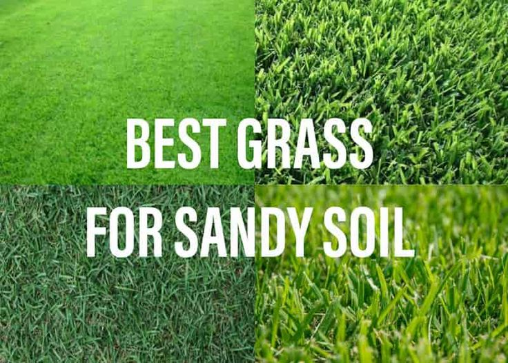 Do you have sandy soil in your garden lets share some