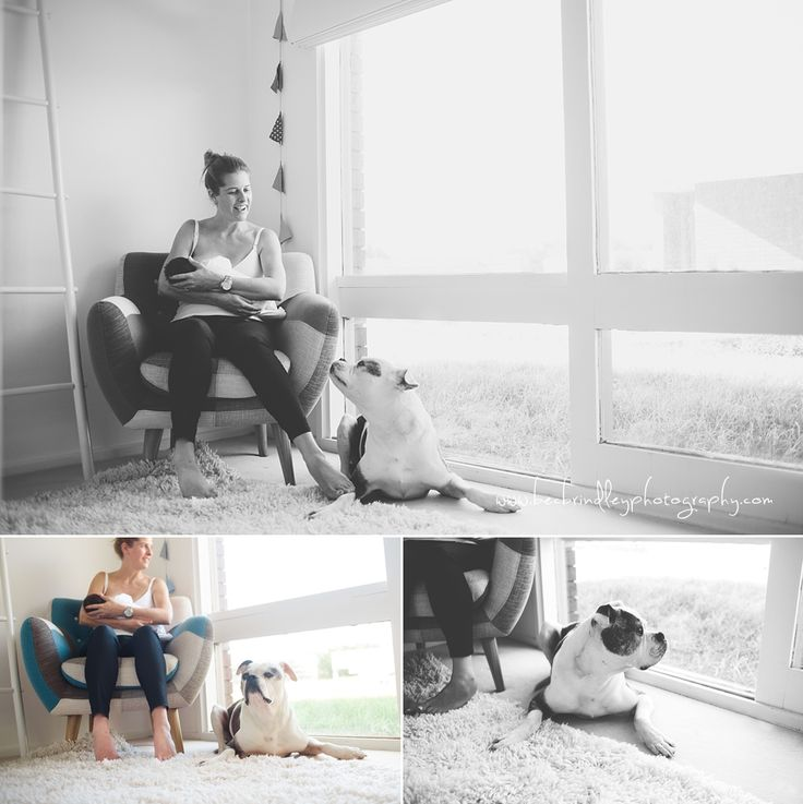 Dog and newborn session