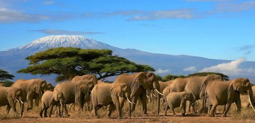 Our East Africa adventure tours and safaris in are constantly prepared to make your treks agreeable in Kenya, where snow topped mountain, Great Rift Valley, and the brave untamed life will improve your experience. Visit our website to know more about us.