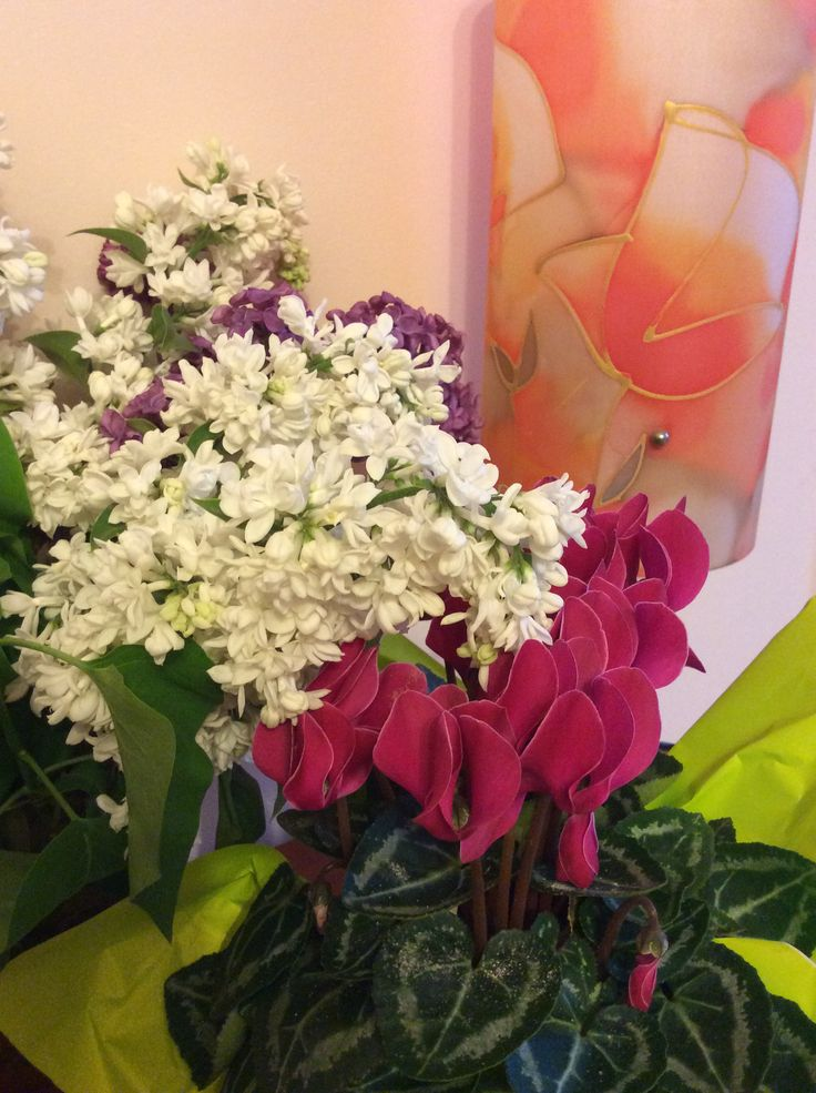 Orgona/Lilac
