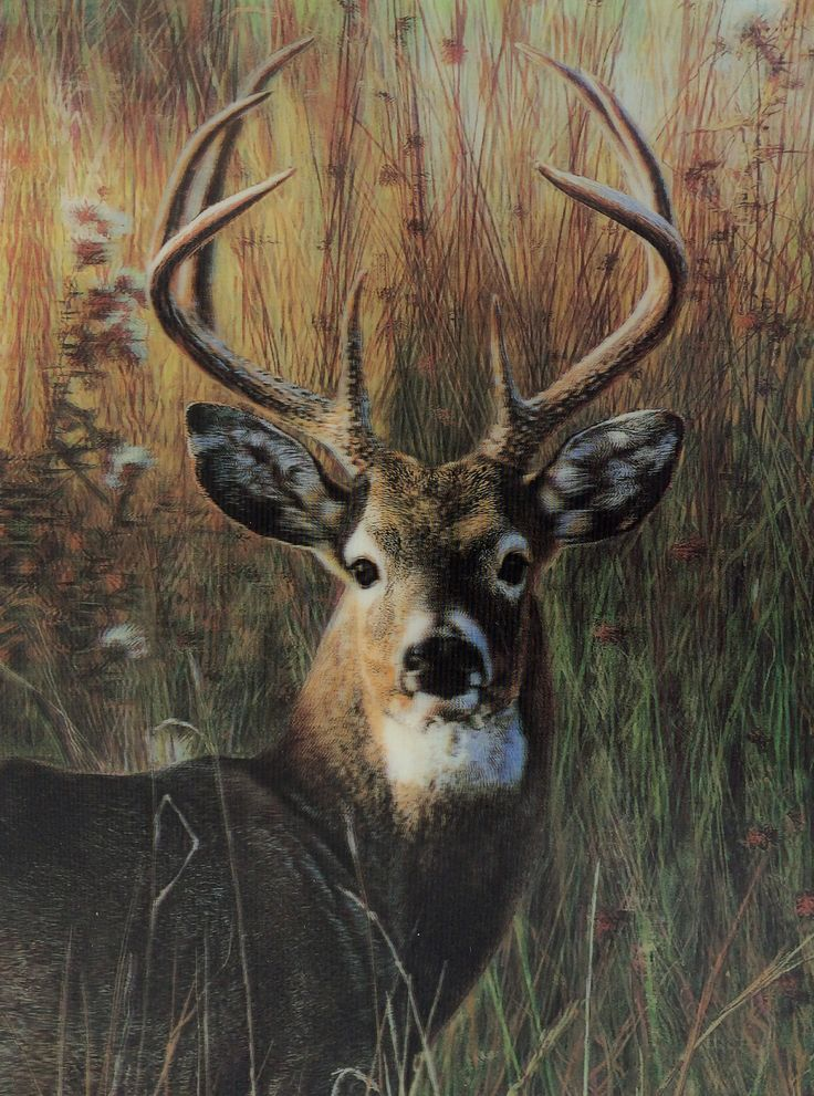 3D Picture - Big Buck
