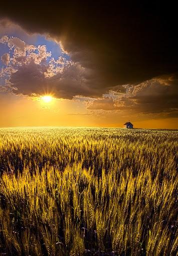 Prairie Land, South Dakota, Phil Koch