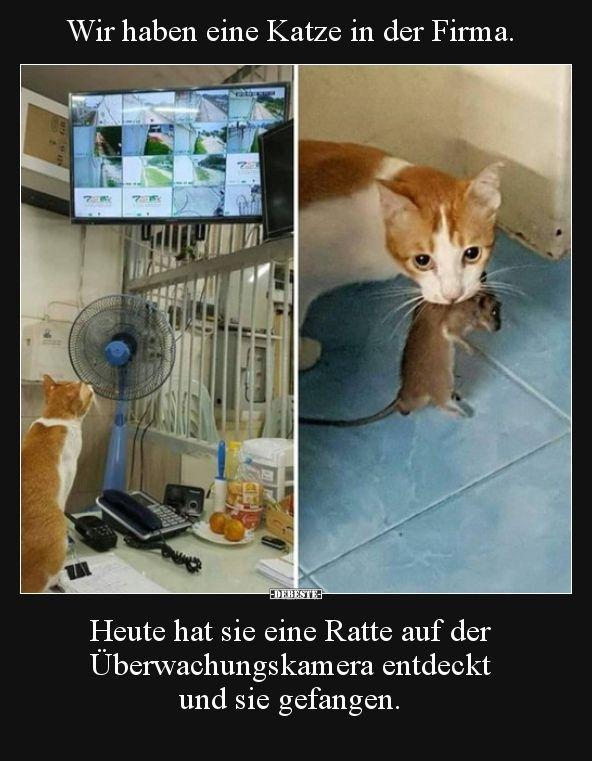 Wir haben eine Katze in der Firma. Heute hat sie eine Ratte.. – m