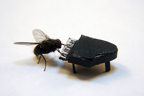 fly playing piano: Dead Flying, Funny Things, The Piano, Art Design, Minor Keys, Flying Art, Plays Piano, Nicholas Hendrickx, Adorable Animal