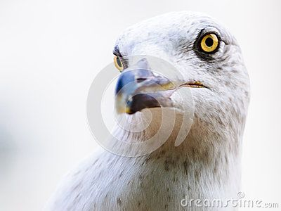 Gull Portrait Head Sea Life - Download From Over 28 Million High Quality Stock Photos, Images, Vectors. Sign up for FREE today. Image: 48433778