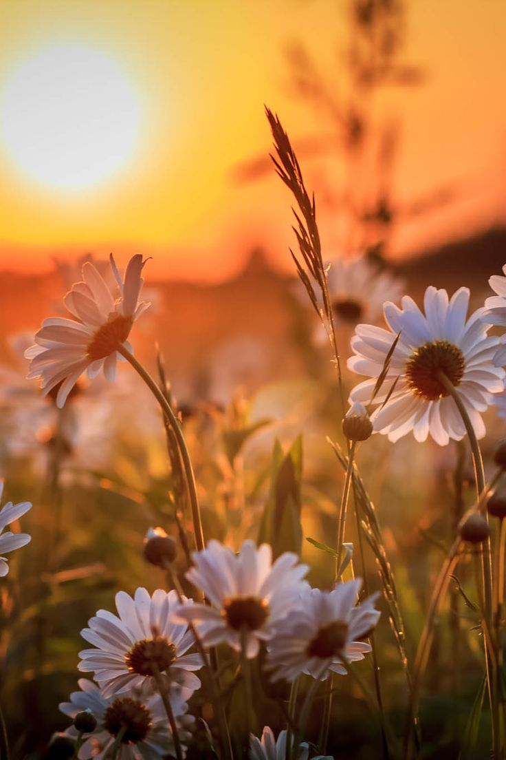 ponderation:  Prairie Sunset by MikeMartin