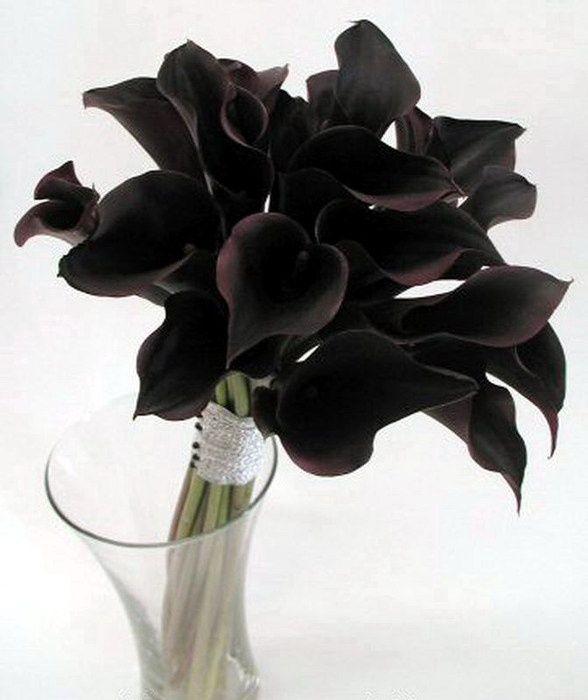 Черные каллы являются теми цветами, от которых вы не сможете отвести ошеломленный взгляд. Таинственные и элегантные, они воплощенные фантазии. Хоть они не черного цвета, темно-бордовые и темно-фиолетовые оттенки очень похожи на безупречно черный. Эти растения более редкие, чем традиционные белые, может быть именно поэтому, они были так ожидаемы садовниками и были так высоко оценены влюбленными парами.