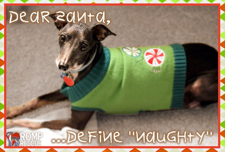 Funny dog christmas card sayings, Funny pet christmas card sayings