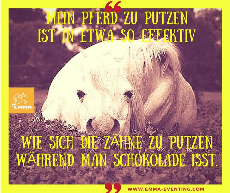 #pferdeshampoo, www.emma-eventing.com