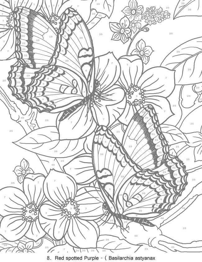 creative haven butterflies color by number coloring book butterfly papillon mariposas vlinders wings graceful amazing coloring pages colouring adult deta - Detailed Coloring Pages 2