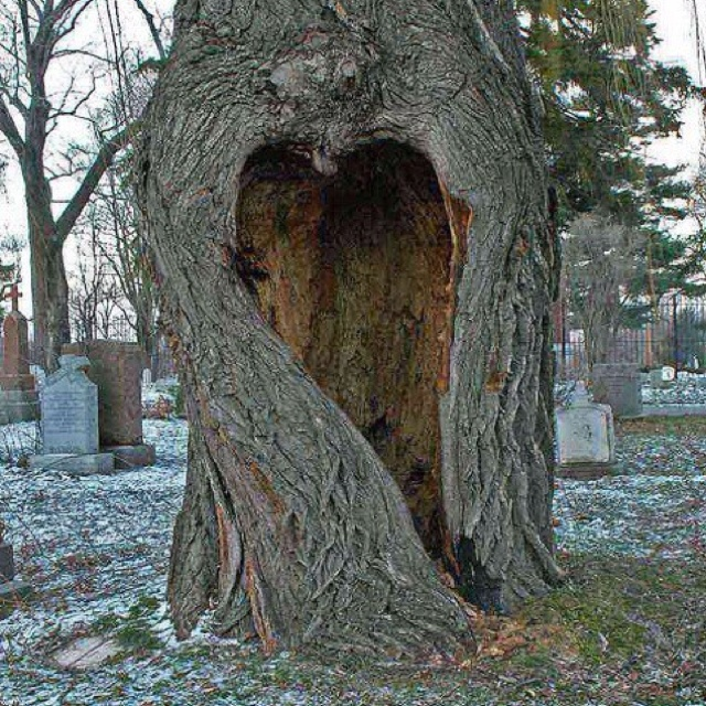 maybe my next house will have tree in the yard!!!!!!!!