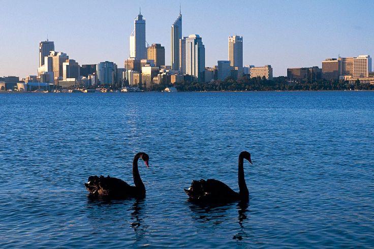 swan river - Google Search