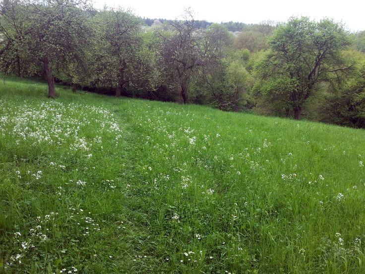 Na Krutci | Pražská příroda
