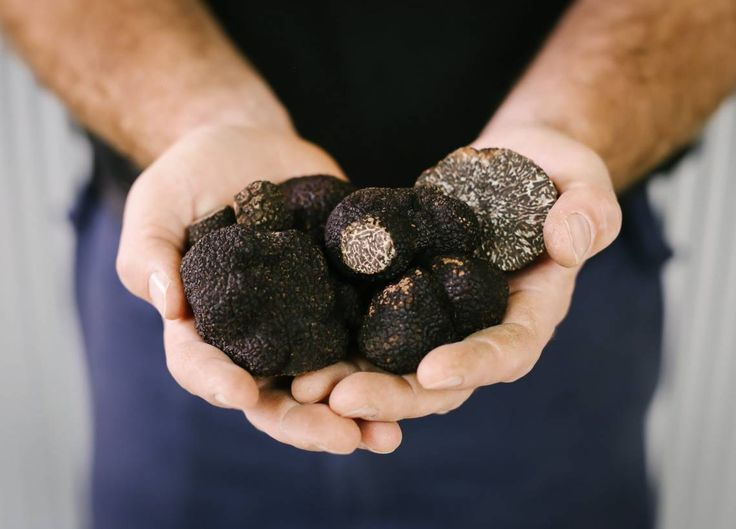 Farmer with handful of large truffles
