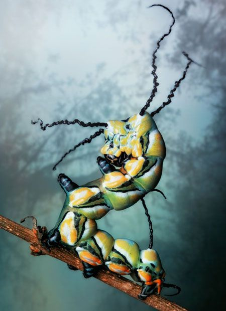 Brahmaea Hearseyi (Brahman moth) : Amazing reptiles and amphibians photographed by Igor Siwanowicz