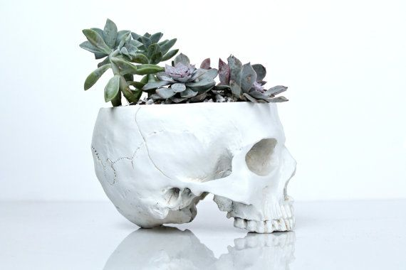 Hey, I found this really awesome Etsy listing at https://www.etsy.com/listing/265890767/skull-planter-large-size-succulents