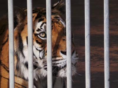 """Zoo e benessere degli animali, denuncia Lav: """"Normativa Ue carente"""""""