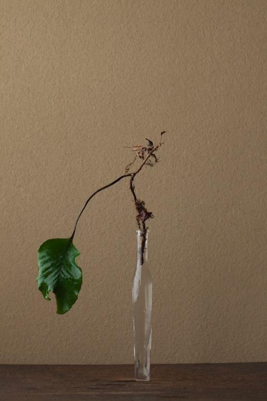 2012年2月21日(火) 群生する草ですが、この葉は変りもの。そこに惹かれます。 花=一つ葉(ヒトツバ) 器=古ガラス細瓶(20世紀)