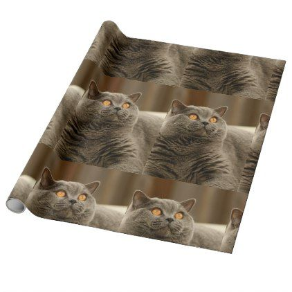 british shorthair blue wrapping paper - blue gifts style giftidea diy cyo