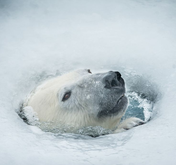 Hole in the Ice by Justin Lo