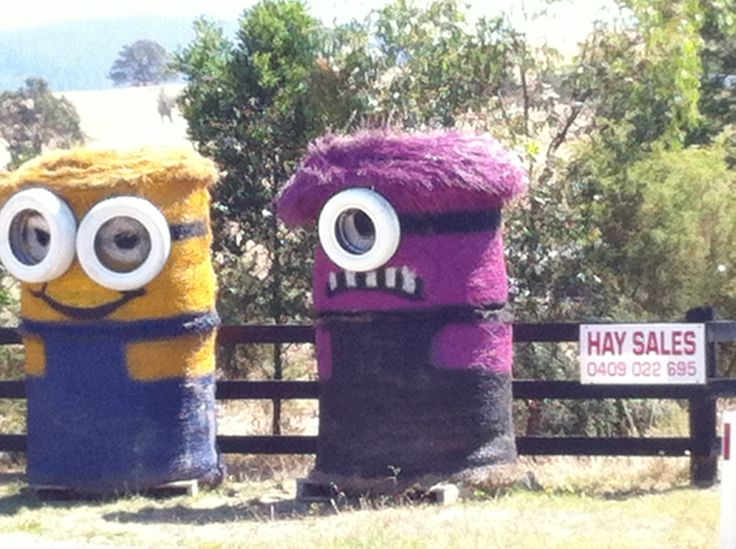 Minions and Minions Of Hay Bales For Sale and Funny Banana Song!