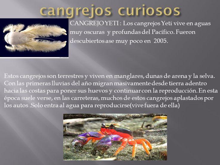 Resultado de imagen para cangrejo y donde vive