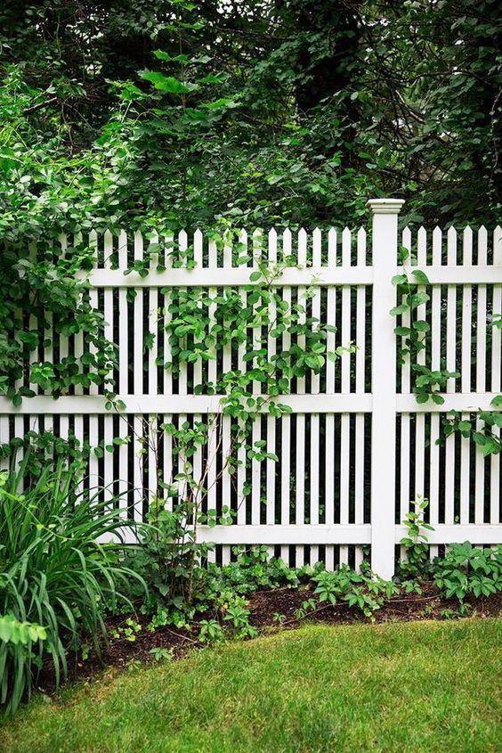 Trädgårdsplank klassiskt vitt. Smala vita stående ribbor. Mindre än 50% ljusgenomsläpp räknas som plank. Staket vid tomtgräns har oftast en maxhöjd för bygglovsfritt. Alltid bygglovsfritt max 3,6 m ut från hus, om det är är mer än 4 m från tomtgräns, och max 180 cm högt.