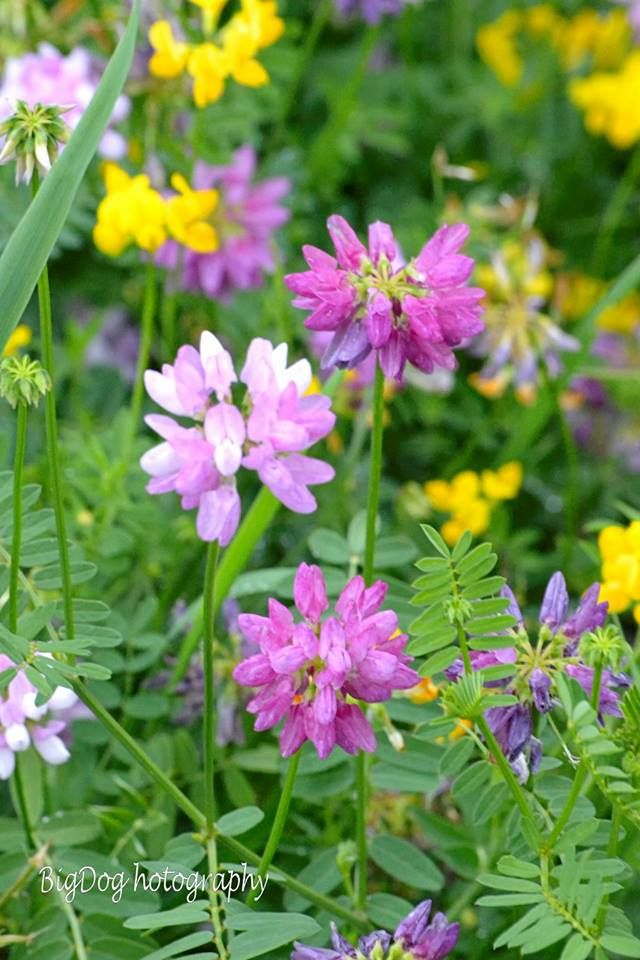70 best picking wildflowers images on pinterest