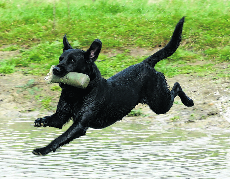 A whirlwind year of challenges and triumphs in the field by Paul Rawlings - http://www.dogworld.co.uk/product.php/89189