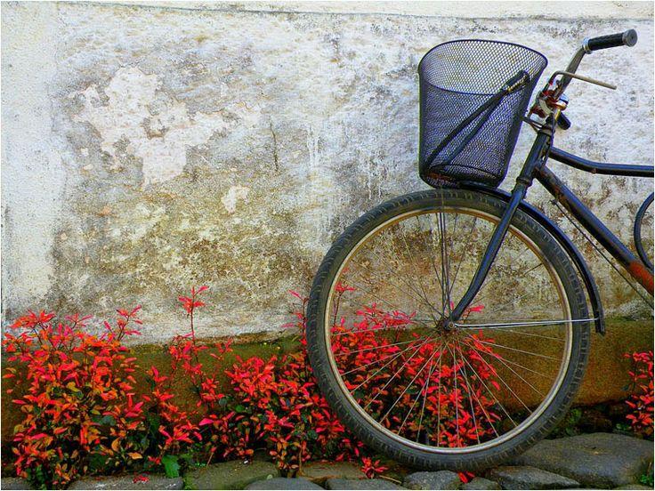 Compact Camera, Best Photo of the Day in Emphoka by Josi Pereira, Nikon Coolpix P80, https://flic.kr/p/nAqKnA