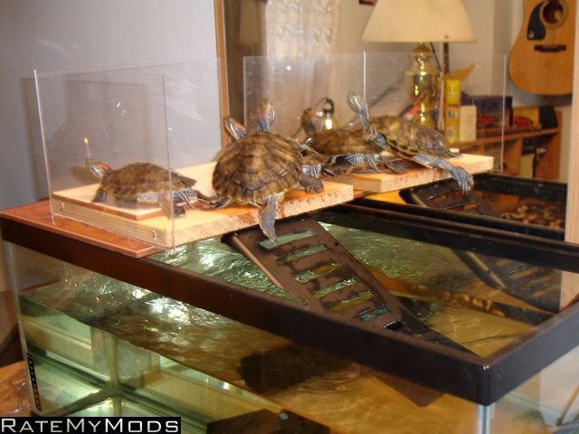 Turtle Dock Design Pinterest Turtles And