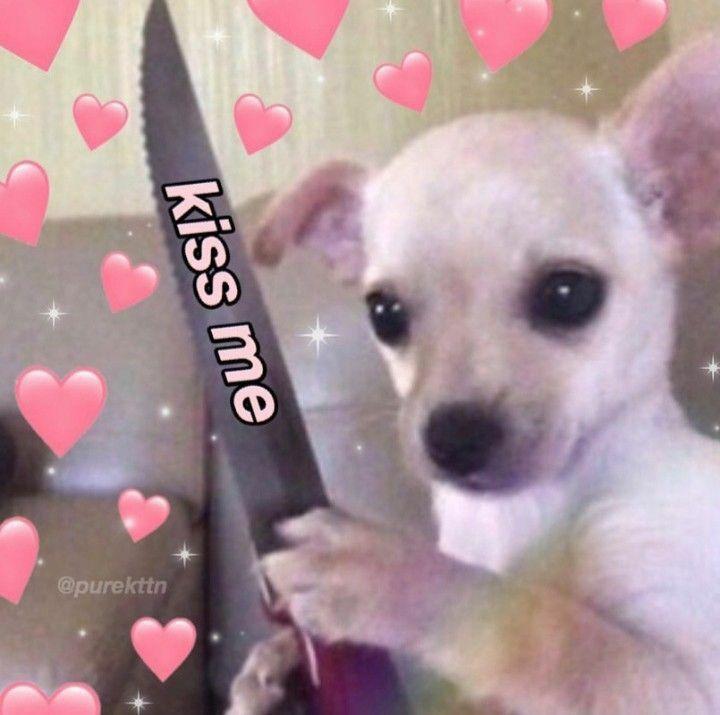 Twitter Stuff Icon Puppy Cute Cat Memes Cute Love Memes Cute Animal Memes