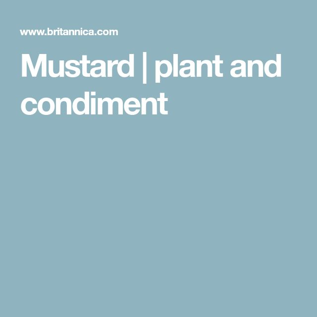 Mustard | plant and condiment
