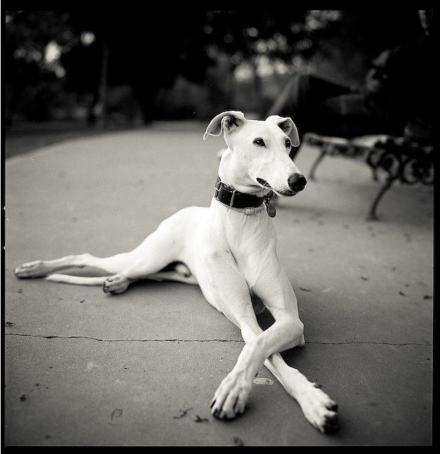 So majestic. Whippet love.