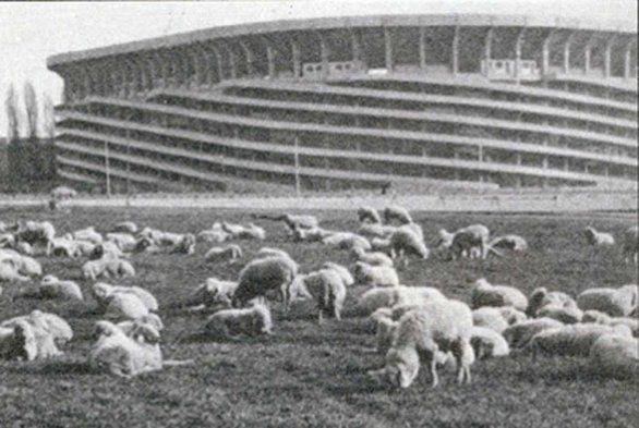 Stadio di San Siro : le pecore pascolano indisturbate  1950/51