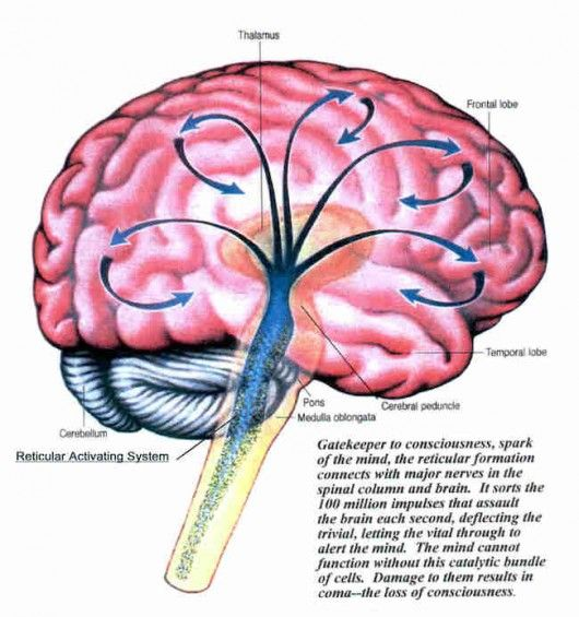 Structure and Functions of the Reticular Activating System