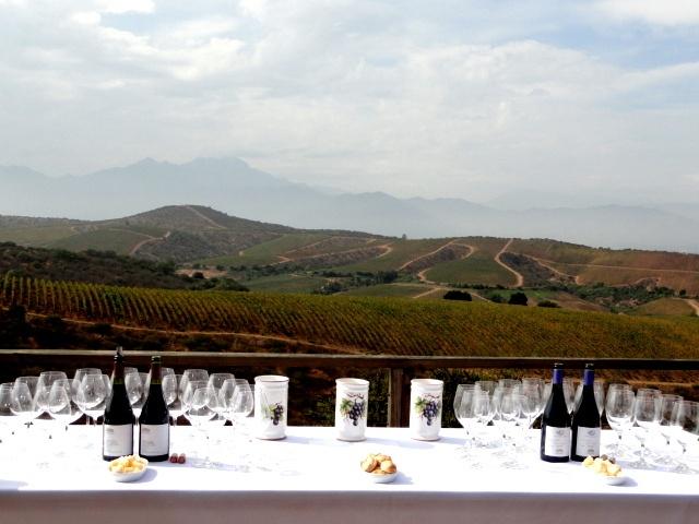 #Errazuriz #vineyard #wine MANZANAR