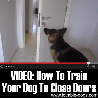 How To Train Your Dog To Close Doors