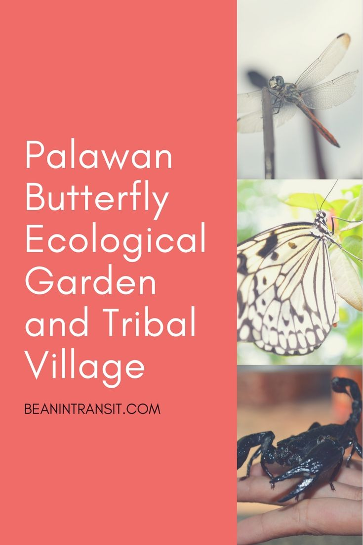 Palawan not only takes pride of their majestic beaches and lagoons, but also for having a diverse habitat for different species.