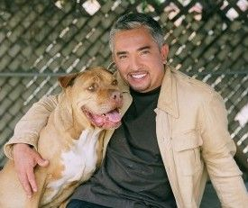 """Cesar Millan announced via FB that the final season of Dog Whisperer will premiere Saturday, July 7, 2012..      Even though this is my last season of Dog Whisperer in the U.S., I won't be gone for very long! I'm already working on a new show called Leader of the Pack dealing with the important issue of dog abandonment and finding homes for """"unadoptable"""" dogs. http://www.cesarsway.com/newsandevents/entertainmentnews/TV-Show-Submissions"""