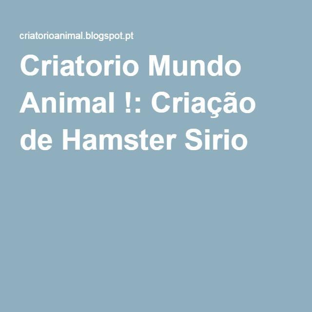 Criatorio Mundo Animal !: Criação de Hamster Sirio